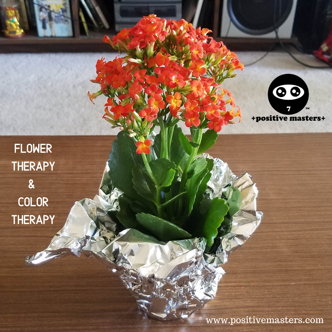 Orange Kalanchoe flowers for flower therapy and color therapy!